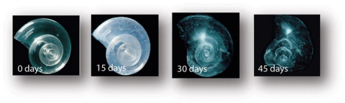 Lack of calcium corbonate. [http://www.pmel.noaa.gov/co2/story/What+is+Ocean+Acidification%3F/