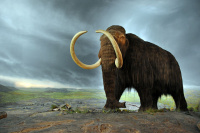 640px-Woolly mammoth 2.jpg