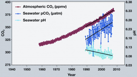 Carbon dioxide and pH scale. [http://ocean.si.edu/ocean-acidification/