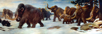 640px-Wooly Mammoths.jpg